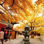 Outono chinês e seus destinos turísticos imperdíveis