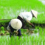 Agricultura chinesa: o que ela tem a nos ensinar?