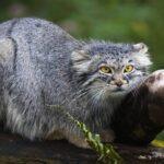 Impressionantes animais nativos da Ásia